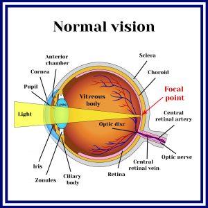 Normal Eye Structure | Refractive Errors | Burlington County Eye Physicians
